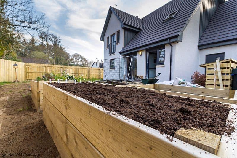 Raised garden beds in the backyard