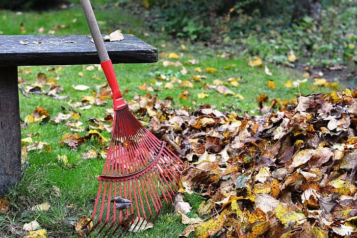 rake with a pile of fallen leaves