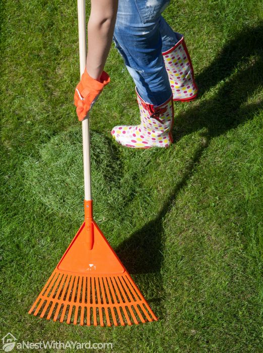 collecting grass clippings with a rake