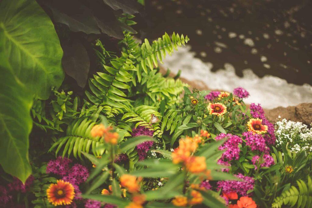 Fern landscaping ideas fi