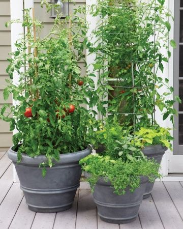 A small garden with  tomatoes in containers  #smallGarden #SmallGardenDesign #smallyardlandscaping #gardenIdeas #backyardLandscaping #backyardLandscapingIdeas #landscaping