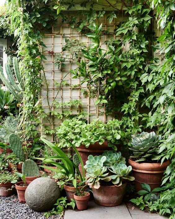 A small garden with succulents  #smallGarden #SmallGardenDesign #smallyardlandscaping #gardenIdeas #backyardLandscaping #backyardLandscapingIdeas #landscaping