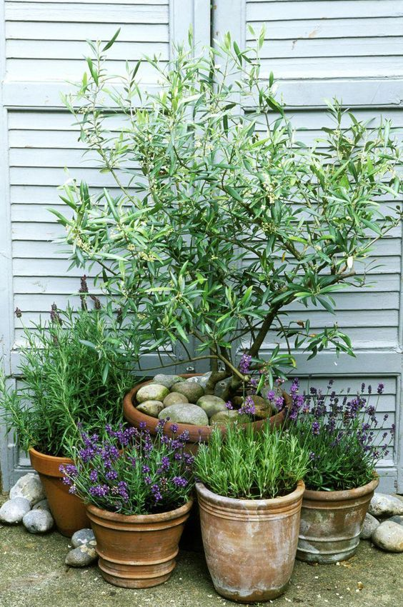 Multiple plants in containers groupped together  #smallGarden #SmallGardenDesign #smallyardlandscaping #gardenIdeas #backyardLandscaping #backyardLandscapingIdeas #landscaping
