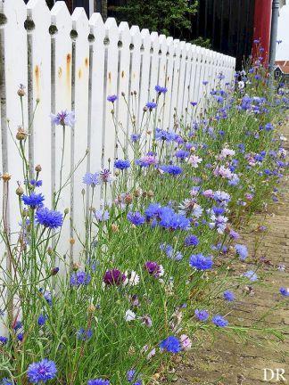A small flower garden near a fence  #smallGarden #SmallGardenDesign #smallyardlandscaping #gardenIdeas #backyardLandscaping #backyardLandscapingIdeas #landscaping