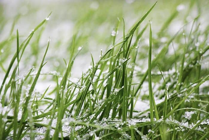 clumps of snow on grass