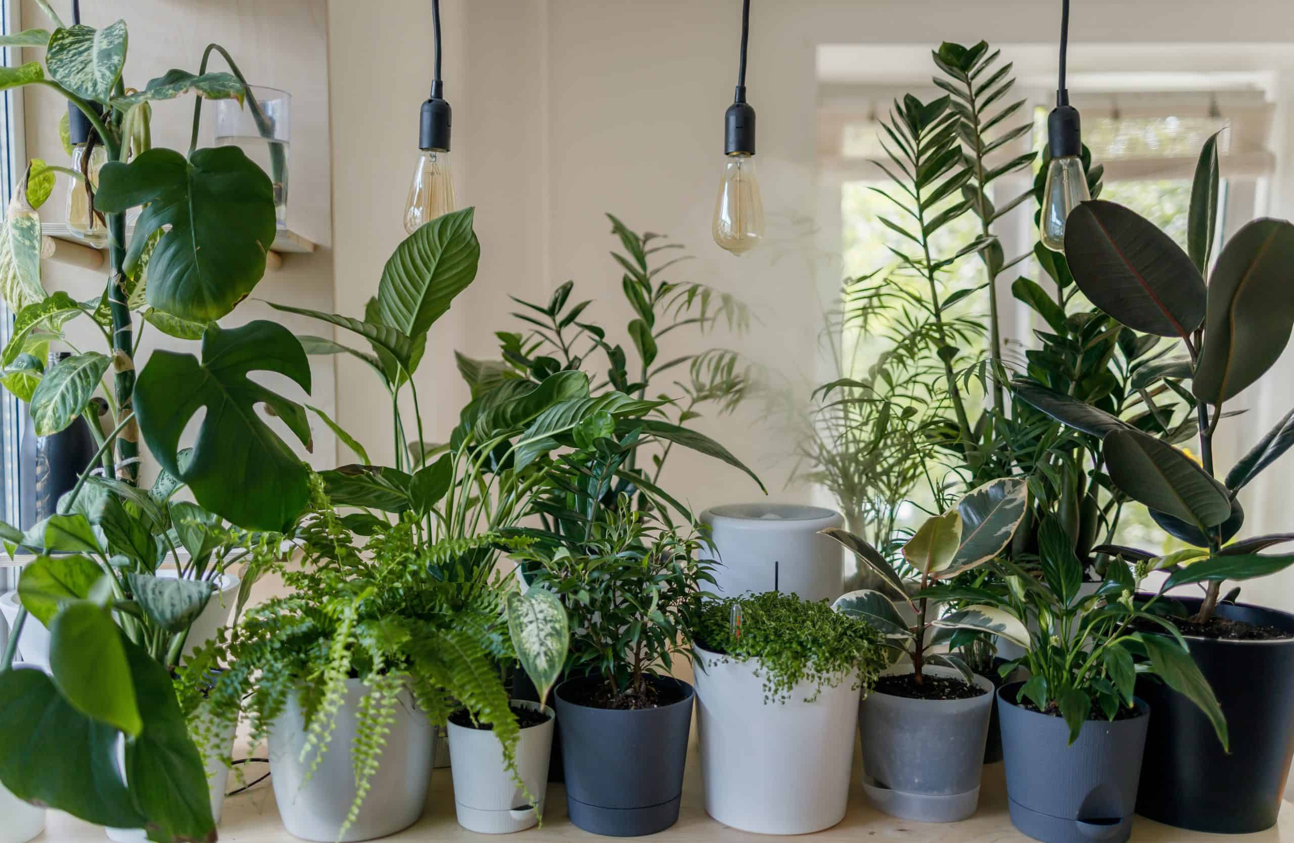 51 Awesome Indoor Garden Ideas For Your Home