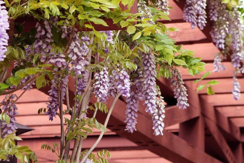 Tips and tricks for taking care of your pergola #pergola #backyard #livingSpace