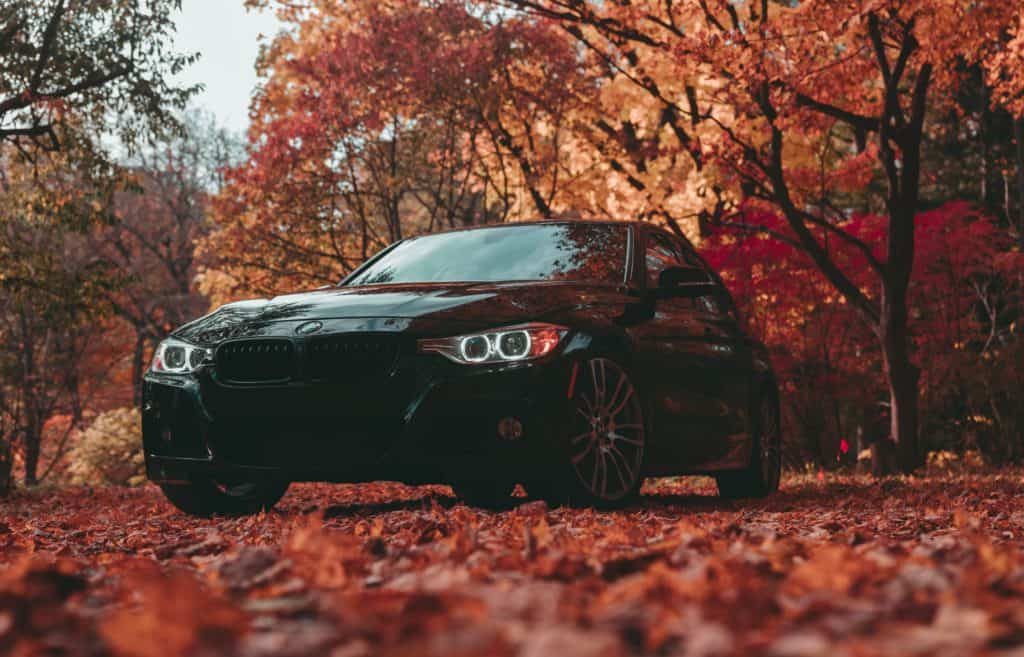 A car drives along a bed of dry leaves